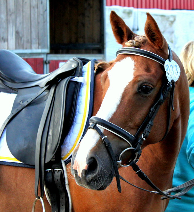 tävlings regler c ponny